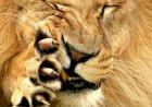 DPD RI, Macan Ompong Yang Mulai Mengaum